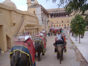 Amber Fort Elephant Pictures