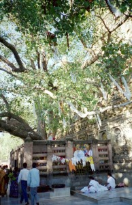 Mahabodhi Temple Bodhi Tree Pictures