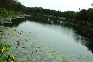 Jatiyo Smriti Soudho Lily Pond