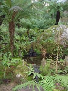 Palace Queen's Fern Garden