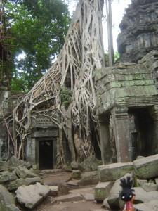 Tree Temple Angkor Wat
