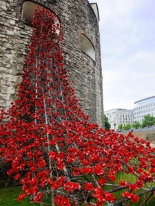The Tower of London Poppy